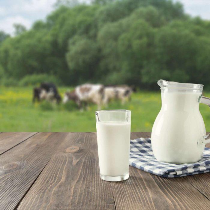be45702539_50160529_filiere-laitiere-vache