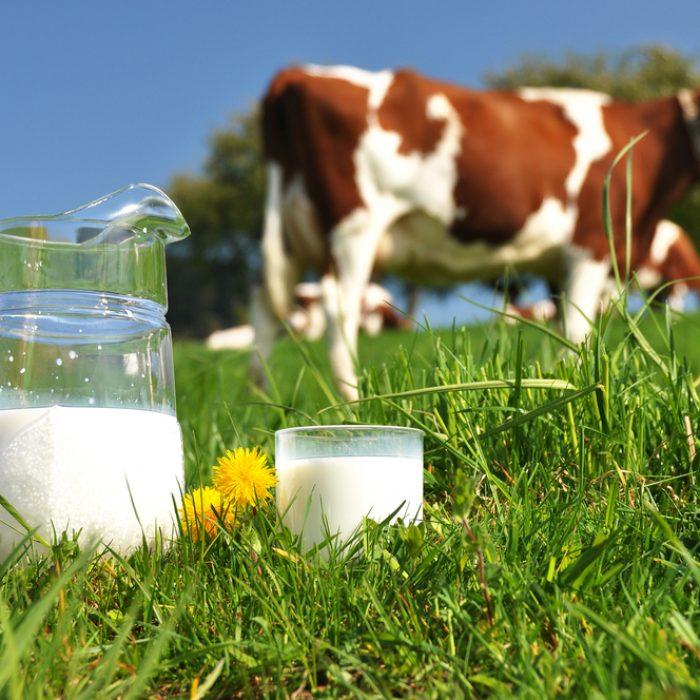 lait-vache