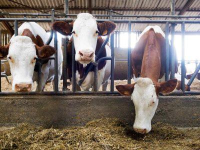 lubrizol-lait-levee-restriction-produit-laitier-normandie-afp-700x389