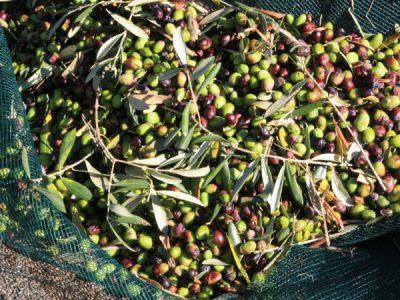 olives_1571083978