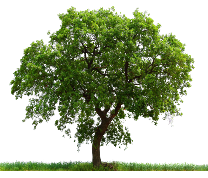 tree_PNG227